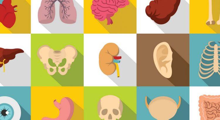 Firkanter med menneskeorganer
