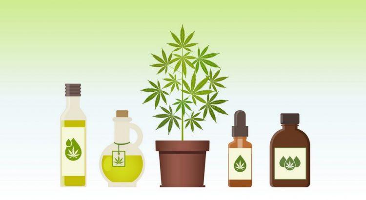 En cannabisplante og forskellgie CBD olier